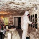 mold-exposure